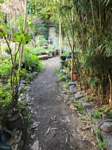 Bamboo tunnel in to the garden.