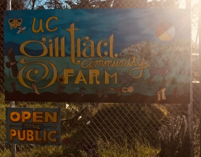 The sun-soaked Gill Tract, on the corner of San Pablo & Marin Avenues.